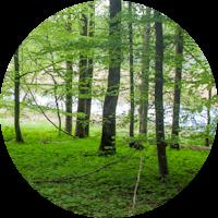 Waldbaden @ Umweltstation Legau